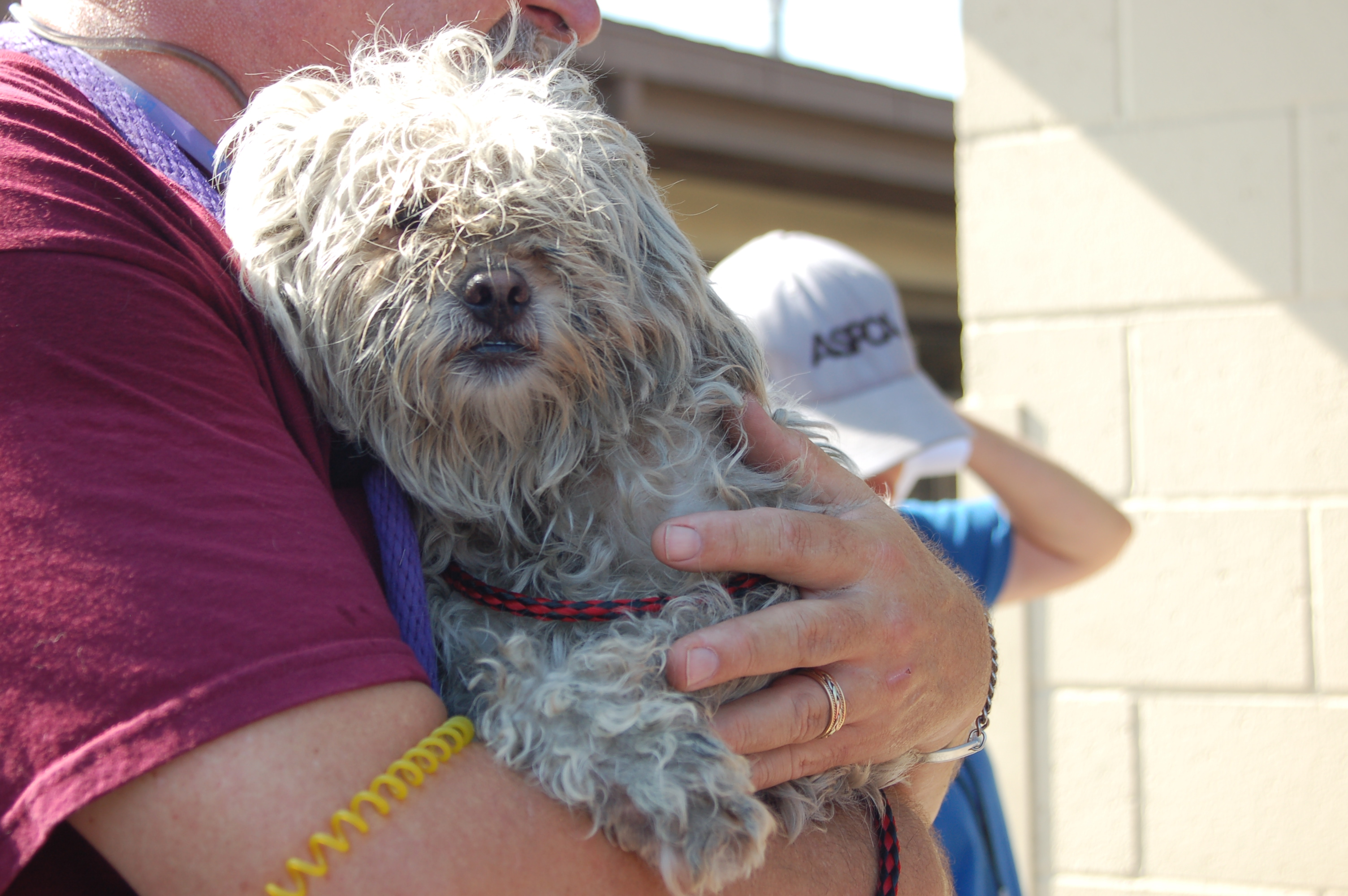 Person holding a small dog at an animal rescue event.