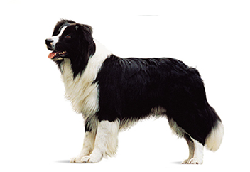 26-40lb Dog with double coat.