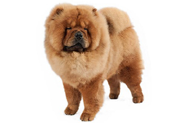 41-70lb Dog with double coat.