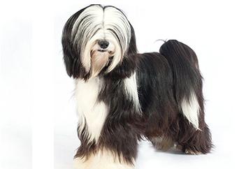 10-25lb Dog with soft coat.
