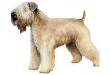 26-40lb Dog with soft coat.