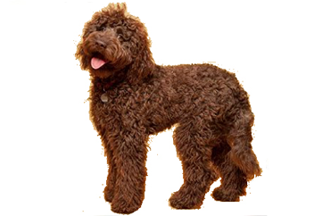 41-70lb Dog with soft coat.