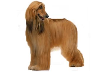 71-90lb Dog with soft coat.