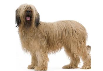 91lb Dog with soft coat.