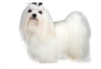 Small Dog with soft coat.