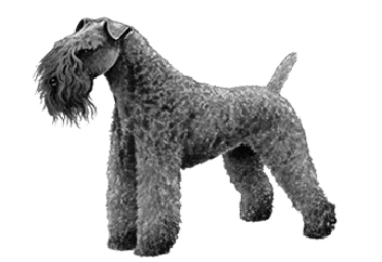 26-40lb Dog with wire coat.