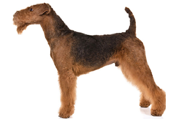 41-70lb Dog with short coat.