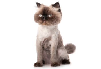 Cat with hair trimmed.