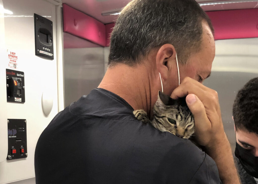 A Groomer cuddles a grey cat.
