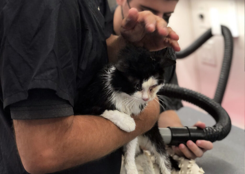 A Groomer cuddles a black and white cat.